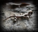 Pendant Lizard Lizzy - bronze