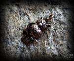 Pendant Owl Kaila - bronze
